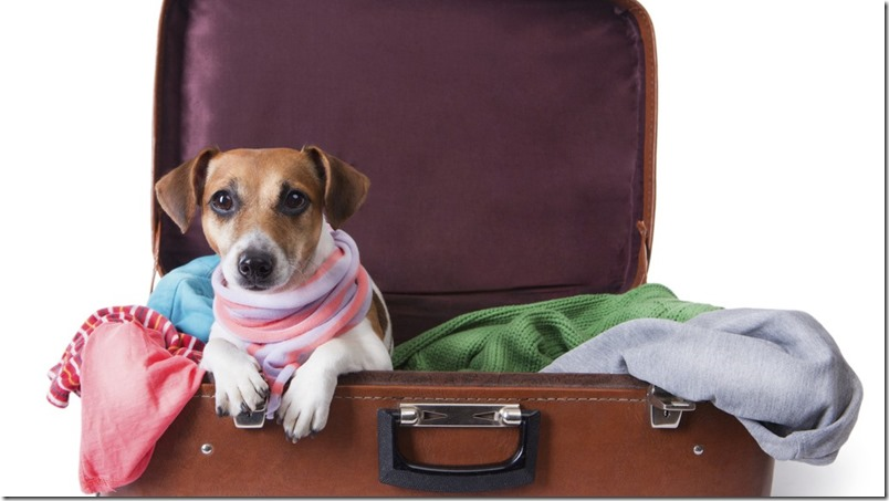 Como emigrar con mascotas