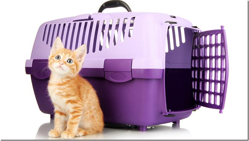 Emigrar con mascotas a España