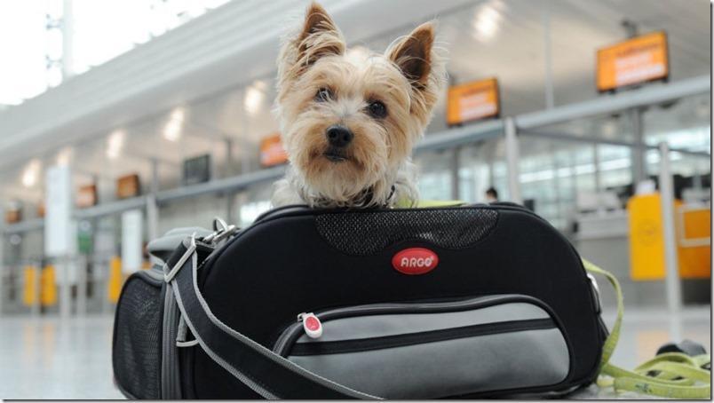 Emigrar con mascotas