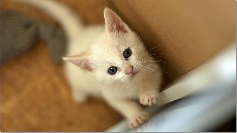 Curiosidades Madrid - Gatos