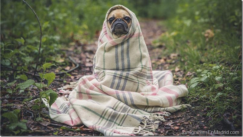 pug-perro-mascota